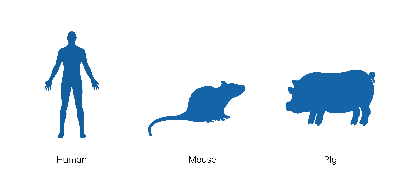 人鼠猪-插画.jpg