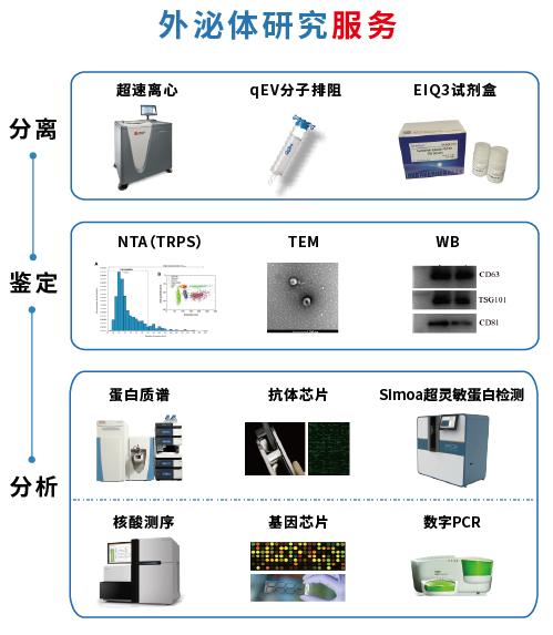 外泌体研究流程图.png