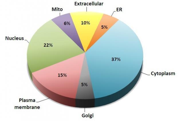 重组蛋白带有gst标签,真核表达系统表达与纯化