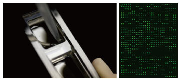 抗体芯片.jpg